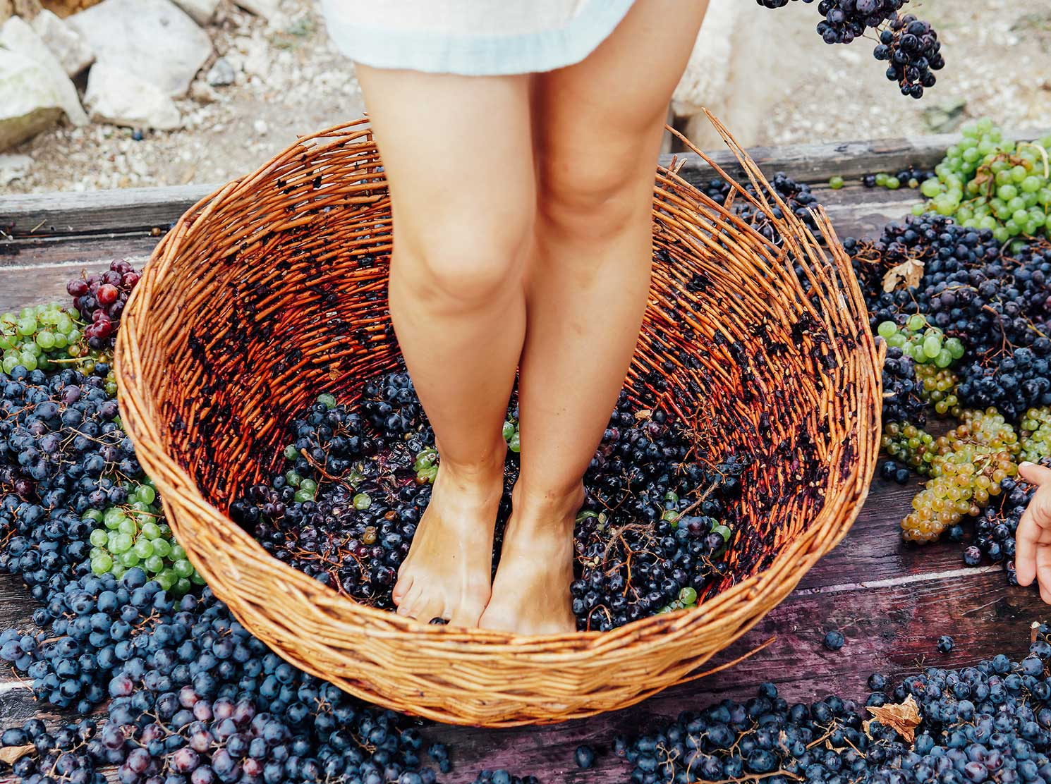 Woman stomping grapes in basket